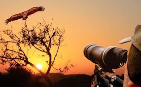 bird-watching-dandeli