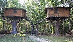 panther-tree-stay-dandeli